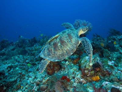 diving-gili trawangan